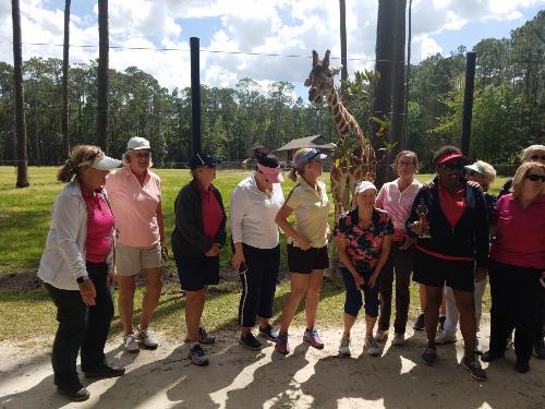 White Oak Group with Giraffe