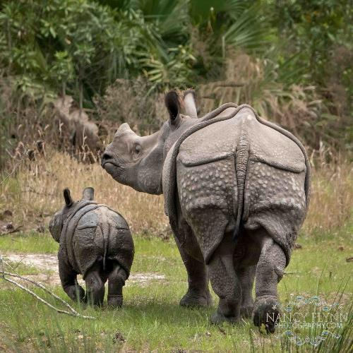 White Oak Mommy and Baby Rhino